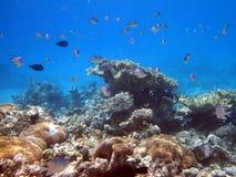 Récif coralien et poissons Photo stock