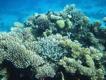 Récif coralien et poissons Images libres de droits