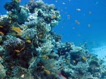 Récif coralien et poissons Photographie stock libre de droits