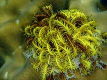 Récif coralien et poissons colorés Images stock