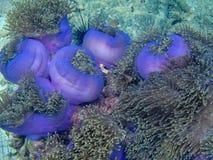 Récif coralien et poissons colorés Image libre de droits
