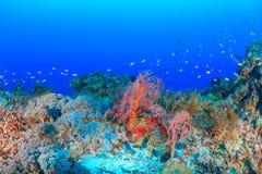 Récif coralien et poissons d'eau profonde Photos stock