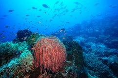 Récif coralien et poissons sous-marins Photographie stock libre de droits