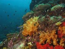 Récif coralien Ko ha, Thaïlande. photo libre de droits
