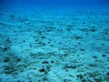 Récif coralien mort Images stock