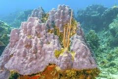 Récif coralien outre de la côte de Raotan Honduras photographie stock