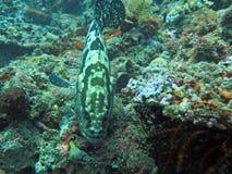 Récif coralien prospère vivant avec l'espèce marine Photos libres de droits