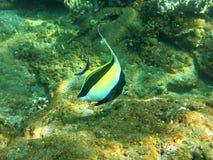 Récif coralien prospère vivant avec l'espèce marine et Photos stock