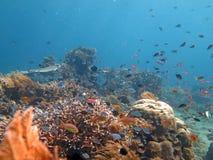 Récif coralien prospère vivant avec l'espèce marine et Image stock