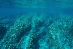 Récif coralien rocheux de fond océanique de paysage marin sous-marin Photographie stock libre de droits