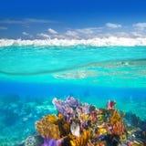 Récif coralien sous l'eau vers le haut vers le bas de ligne de flottaison Photographie stock libre de droits