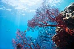 Récif coralien sous-marin Images libres de droits