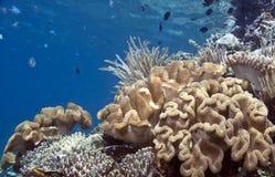 Récif coralien South Pacific photos stock