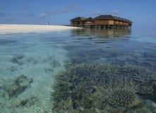 Récif coralien sur les Maldives Photographie stock libre de droits