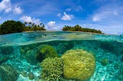 Récif coralien tropical Images libres de droits