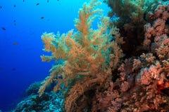 Récif coralien tropical Photo libre de droits