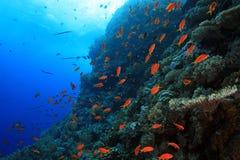 Récif coralien tropical Photographie stock