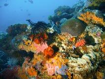 Récif coralien tropical Photos libres de droits