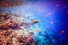 Récif coralien tropical Images stock