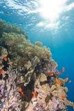 Récif coralien tropical en eau peu profonde. Image libre de droits