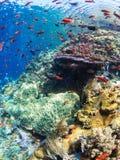 Récif coralien typique en parc national de Komodo Image stock