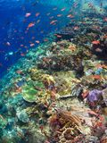 Récif coralien typique en parc national de Komodo Photo stock