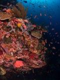 Récif coralien typique en parc national de Komodo Images libres de droits
