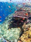 Récif coralien typique en parc national de Komodo Photos libres de droits