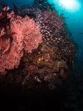 Récif coralien typique en parc national de Komodo Photos stock
