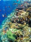 Récif coralien typique en parc national de Komodo Photographie stock libre de droits