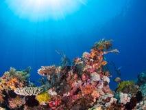 Récif coralien typique en parc national de Komodo Photo libre de droits