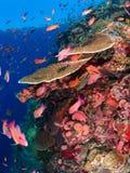 Récif coralien typique en parc national de Komodo Images stock