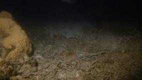Récif coralien vert et fond de la mer vert clips vidéos