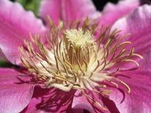 Récif d'étamine de fleur Photos libres de droits