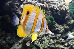 récif de corail de poissons Image stock