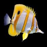 récif de corail de poissons Photo libre de droits