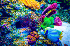 récif de corail de poissons tropical Photos libres de droits
