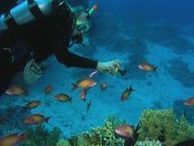 récif de plongeur Photos stock