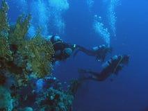 récif de plongeurs Images libres de droits