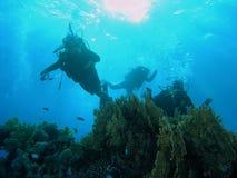 récif de plongeurs Image stock