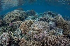 Récif divers Image stock