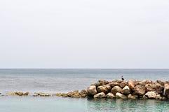 Récif et oiseau rocheux Photo libre de droits