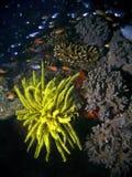 Récif et poissons tropicaux Photographie stock libre de droits