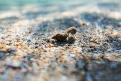 Récif et sable de mer de mer de beauté photographie stock libre de droits