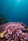 Récif et sunrays tropicaux Images stock