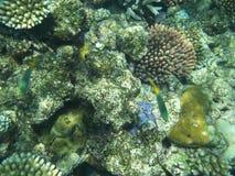 récif grand de barrière Photo libre de droits