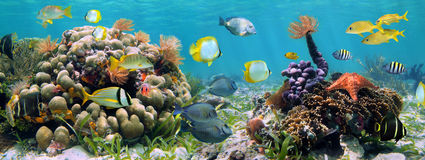 Récif panoramique photographie stock