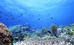 Récif peu profond d'Uepi Photos libres de droits