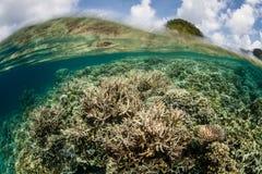 Récif peu profond dans la lagune Images stock