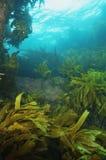 Récif rocheux d'eau peu profonde Images libres de droits
